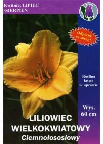 """Liliowiec """"Ewa"""""""