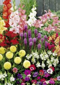 Cebulki kwiatowe zestaw 35szt.
