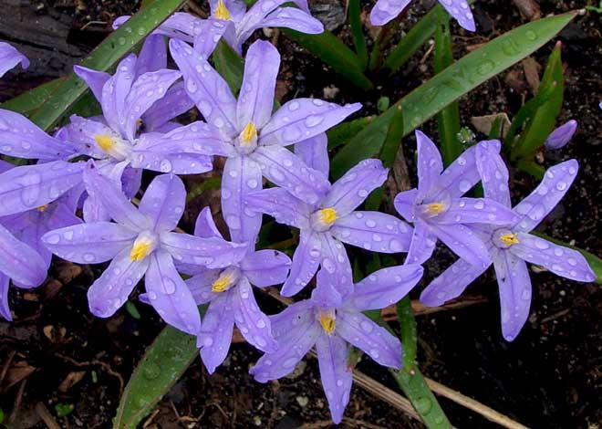Aktualnosc Pierwsze Wiosenne Kwiaty Bilscy Info